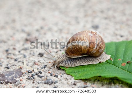 Snail on green leaf in spring day