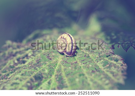 Snail on green plant leaf. Vintage style pictures. - stock photo