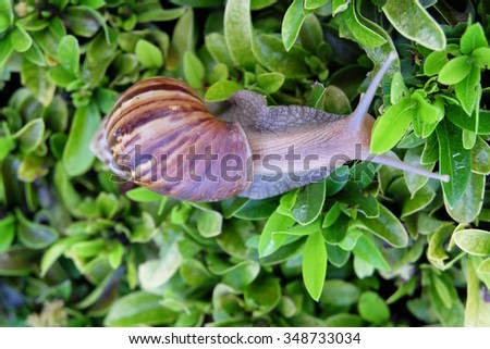 snail on leaves