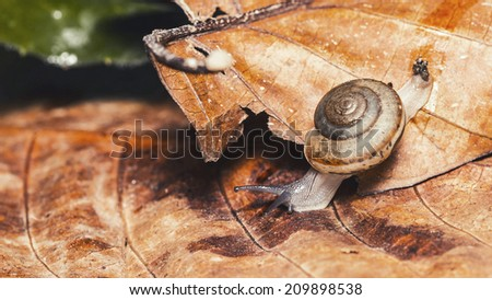 Snail on leaves,abstract background - stock photo