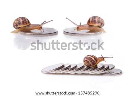 snail on money set - stock photo