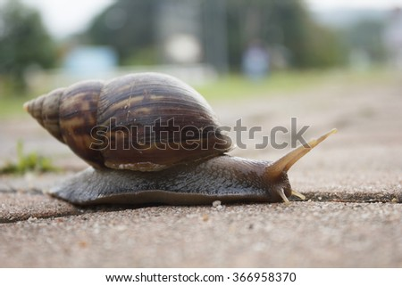 snail on sidewalk