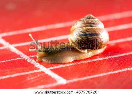 Snail on the athletic track crosses the finish line - stock photo