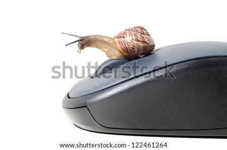 snail on the computer mouse, concept. isolated - stock photo
