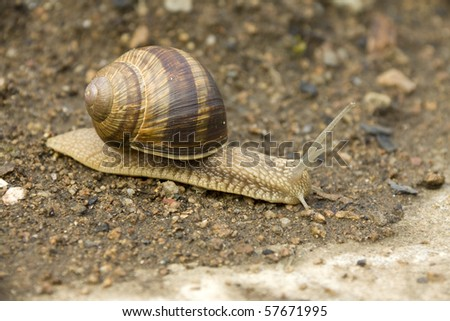 Snail on the Earth
