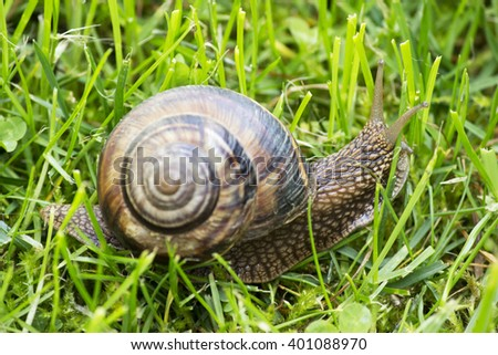 Snail on the grass close up - stock photo