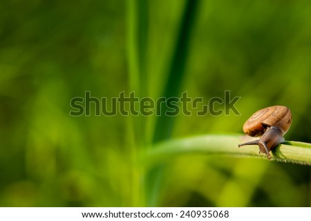Snail on the grass in the morning. - stock photo