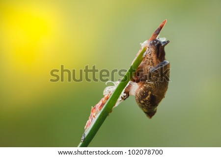 Snail on the Grass with Green Background. Close-up of sleeping snail on green grass early in the morning.