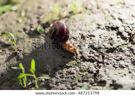 snail on the ground in nature