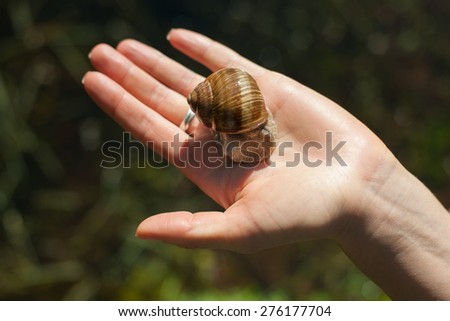 Snail on the hand outdoors - stock photo