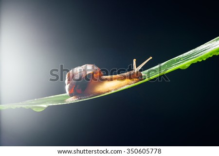 snail on the leaf against dark background - stock photo