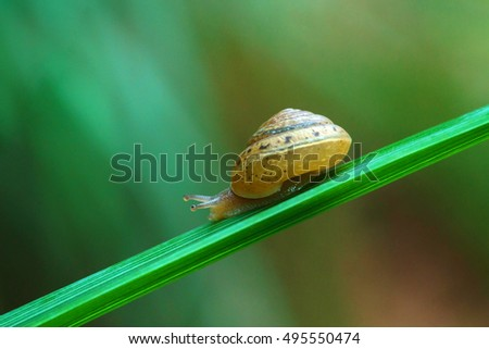 Snail on the leaves create a repeating pattern in a beautiful natural background.