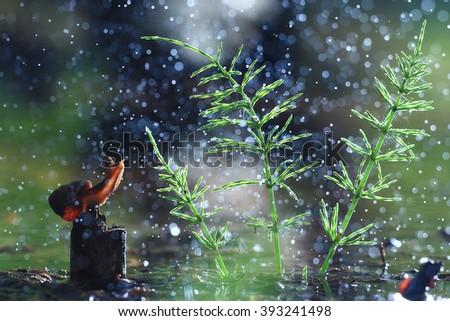 Snail on the marsh spring rain - stock photo