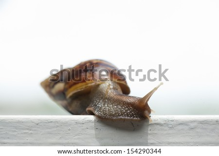 Snail on the white fence