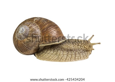 Snail on white background isolated