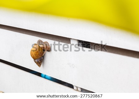 snail on wood white wall