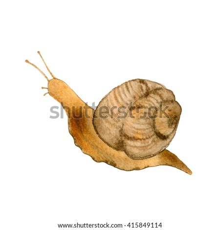 Snail painted with watercolors on white background, watercolor