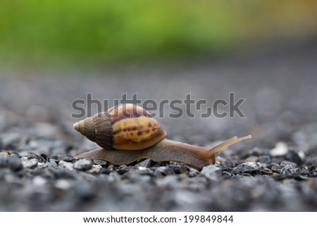 snail run - stock photo