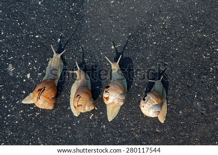 Snail run, animal funny concept, fast competition - stock photo