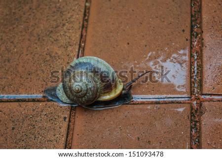 snail running on the floor - stock photo