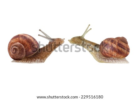 Snail series: snail's date . Two snails are kissing . - stock photo