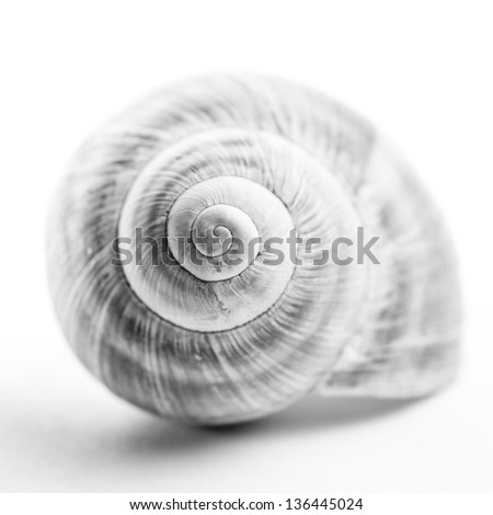Snail shell. High-key view of a snail shell. Shallow depth of field. - stock photo