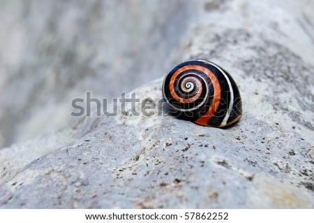 Snail shell in Cuba  - stock photo