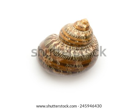 Snail shell isolated on a white background close up - stock photo