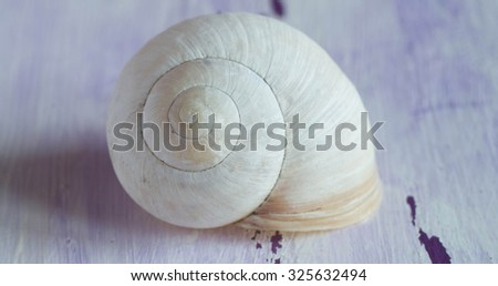Snail shell on a blue background. Twirl.  - stock photo