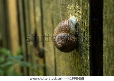 Snail shell on the wood - stock photo