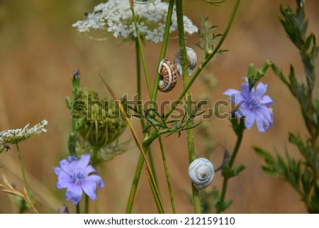 Snail shells on the stems - stock photo