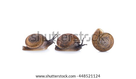 Snail slime isolated on white background .