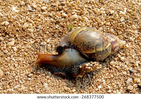 snail sprouting slowly on the sand - stock photo