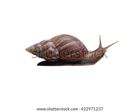 Snail Walking on Isolated