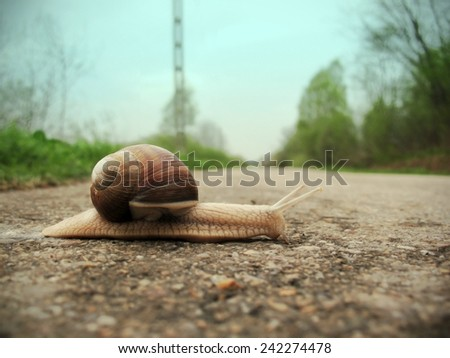 Snaile on the dirt-track in macro close-up blurred background - stock photo