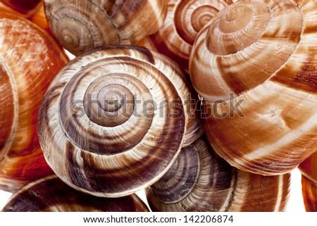 Snails - stock photo