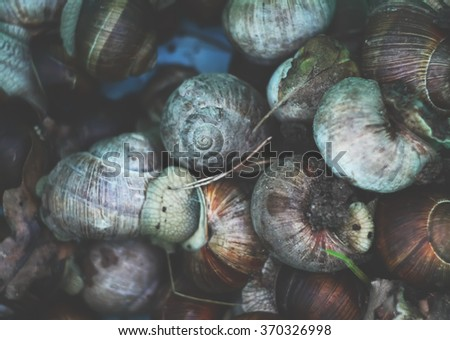 Snails - stock photo