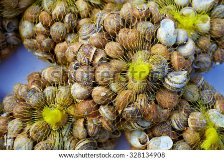 Snails in mesh grid net bag as food in Mediterranean Spain - stock photo