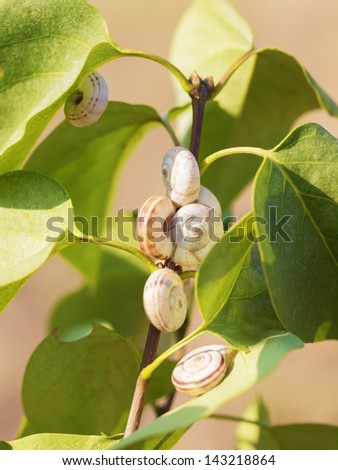 Snails on plant - stock photo
