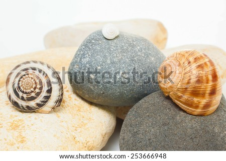 Snails on stones isolated over white background