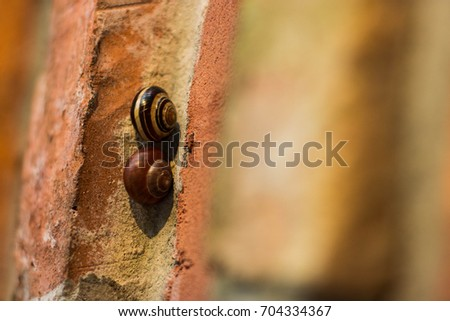 snails on the brick