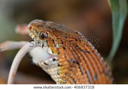 snake and mouse - stock photo