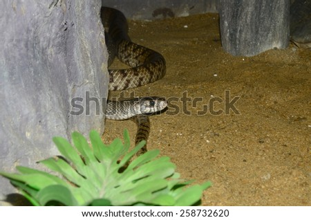 snake close-up - stock photo