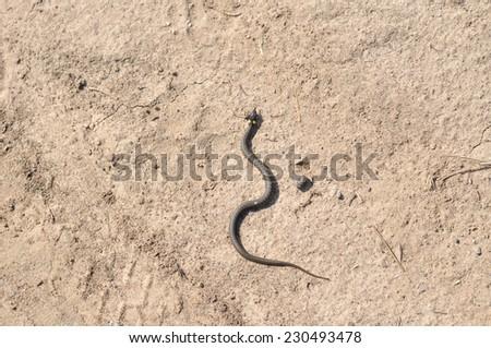 snake crawling on the sand - stock photo