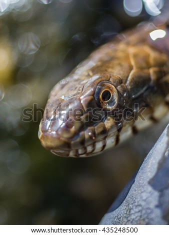 Snake face close-up - stock photo