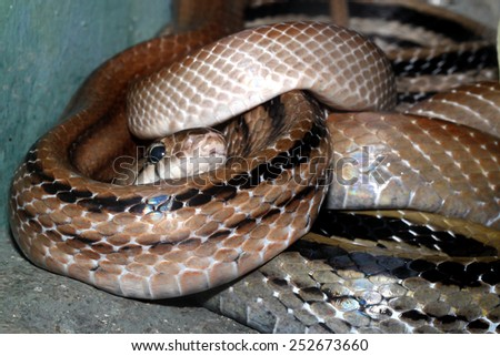 Snake head close up picture - stock photo