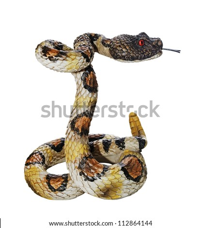 Snake in the attacking front, isolated over white. Year of the snake. - stock photo