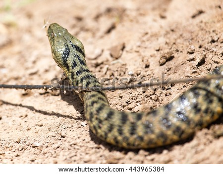 snake in the nature - stock photo