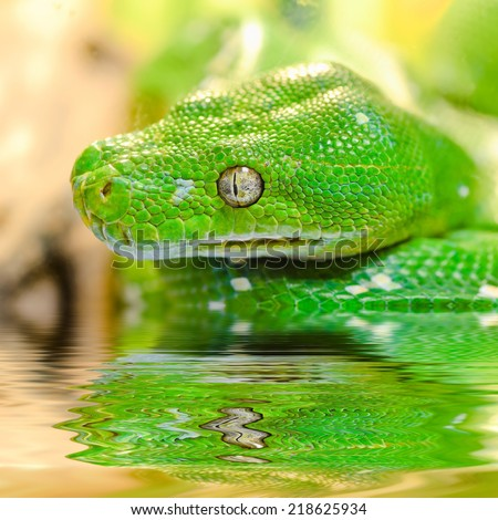 Snake reflected in water. - stock photo