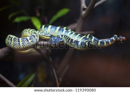 Snake rested on branch - stock photo